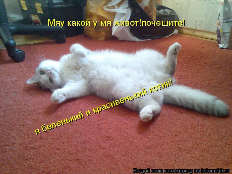 Котоматрица: Мяу какой у мя живот!почешите! я беленький и красивенький котик!