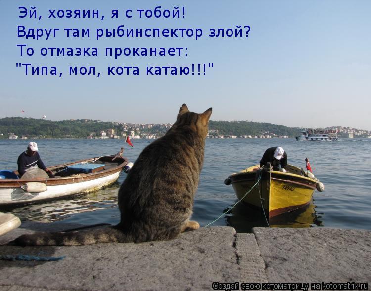 коты ждут рыбаков