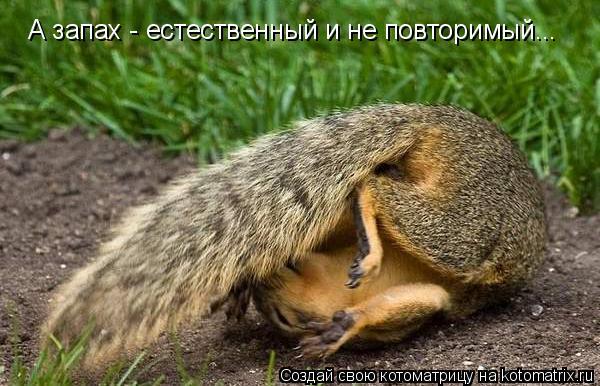 Котоматрица: А запах - естественный и не повторимый...