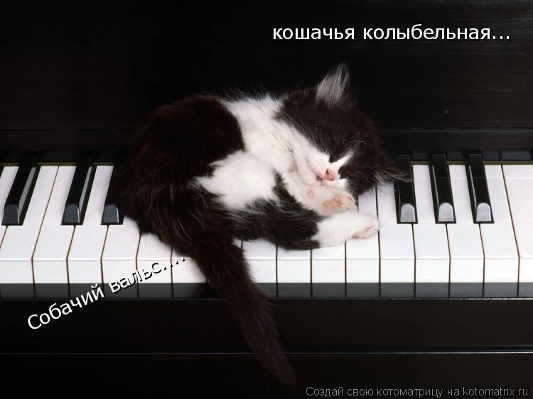Котоматрица: Собачий вальс.... кошачья колыбельная...