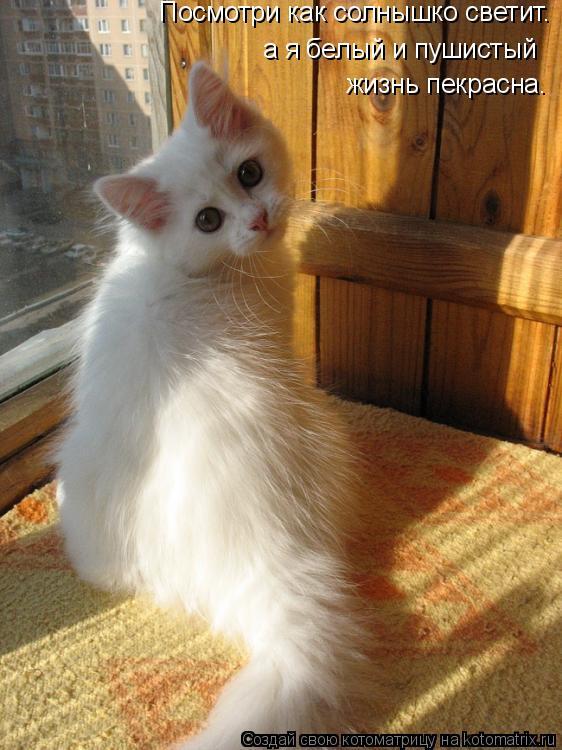 Котоматрица: Март... Высотный дом... Может пониже переедем? Посмотри как солнышко светит. а я белый и пушистый жизнь пекрасна.