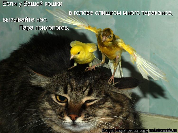 Котоматрица: Если у Вашей кошки в голове слишком много тараканов, вызывайте нас. Пара психологов.