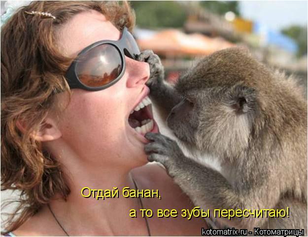 Котоматрица: Отдай банан, а то все зубы пересчитаю!
