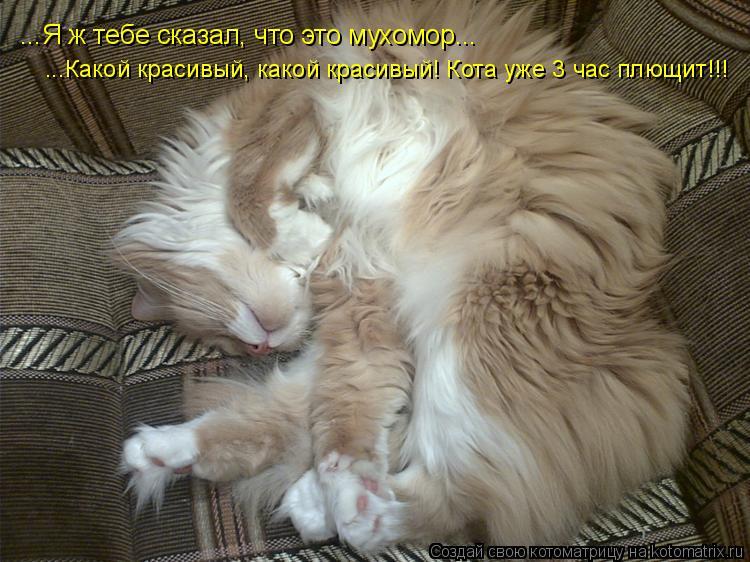 Котоматрица: ...Я ж тебе сказал, что это мухомор...  ...Какой красивый, какой красивый! Кота уже 3 час плющит!!!