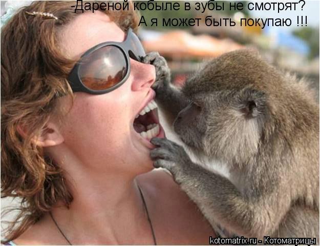 Котоматрица: -Дареной кобыле в зубы не смотрят? А я может быть покупаю !!!