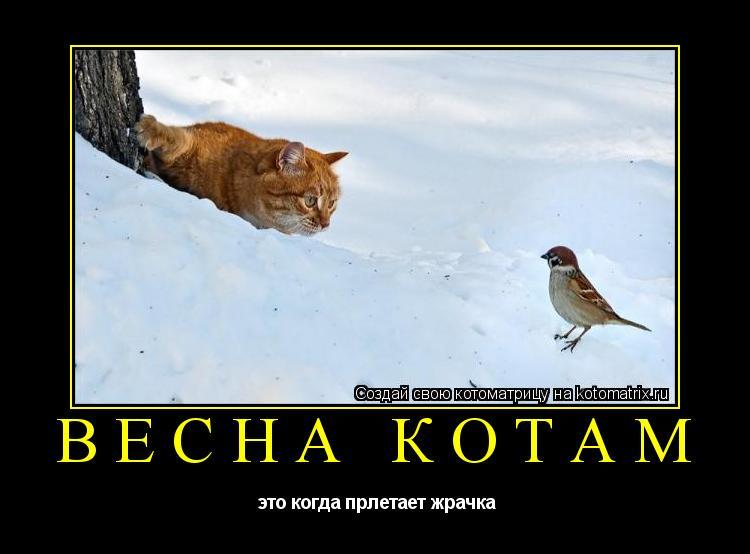 Котоматрица: весна котам  это когда прлетает жрачка