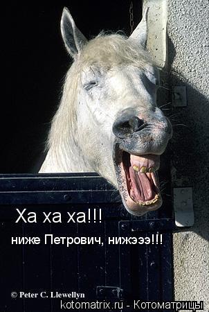 Котоматрица: Ха ха ха!!! ниже Петрович, нижэээ!!!