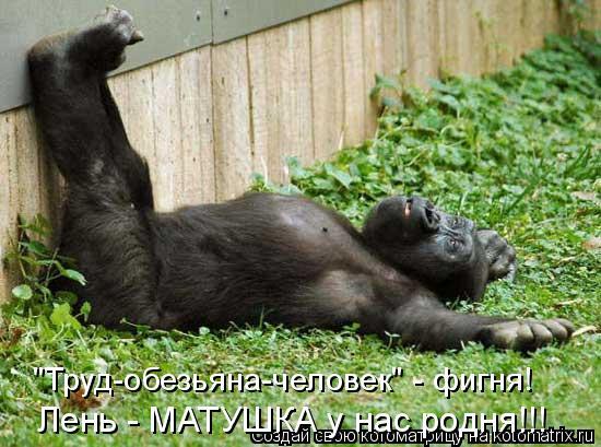 """Котоматрица: """"Труд-обезьяна-человек"""" - фигня! Лень - МАТУШКА у нас родня!!!"""
