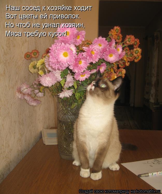 Котоматрица: Наш сосед к хозяйке ходит Вот цветы ей приволок. Но чтоб не узнал хозяин,  Мяса требую кусок!