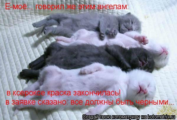 Котоматрица: Е-моё... говорил же этим ангелам: в ксероксе краска закончилась! в заявке сказано: все должны быть черными...