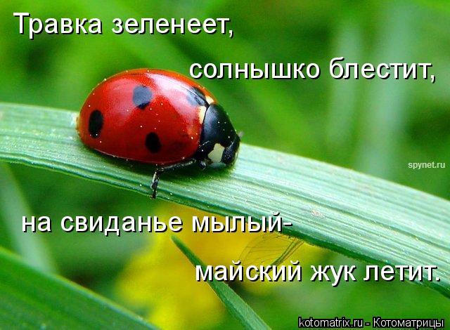 Котоматрица: Травка зеленеет, солнышко блестит, на свиданье мылый- майский жук летит.