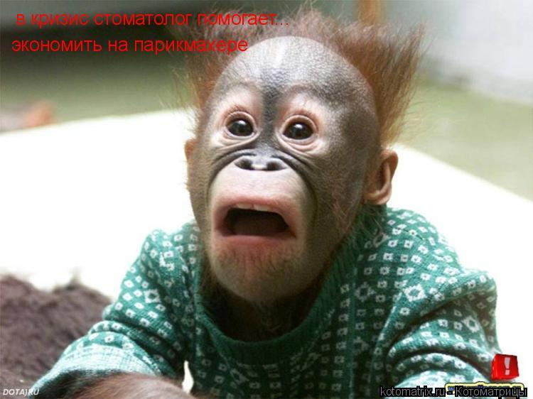 Котоматрица: в кризис стоматолог помогает... экономить на парикмахере