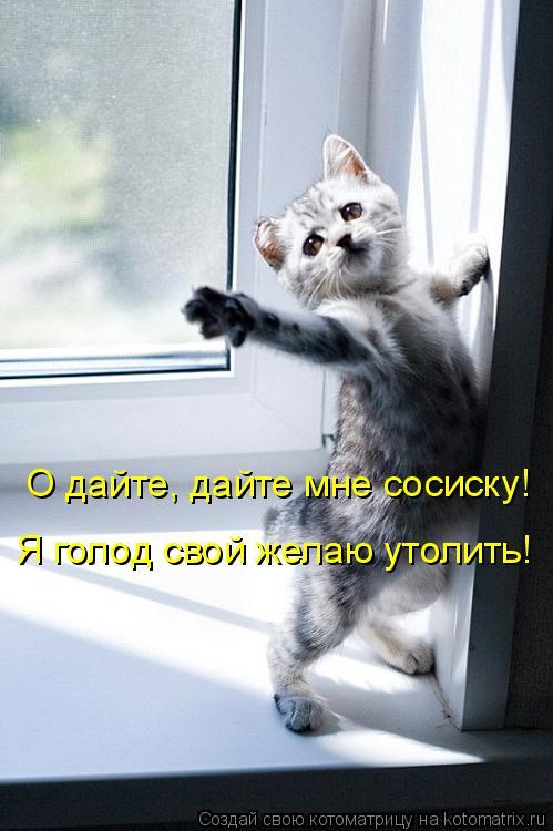 Котоматрица: Я голод свой желаю утолить! О дайте, дайте мне сосиску!