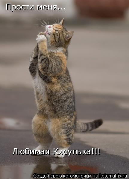 Котоматрица: Прости меня...  Любимая Кисулька!!!