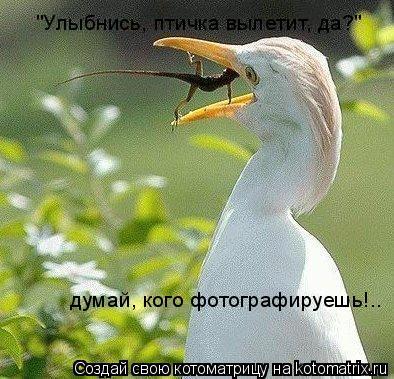 """Котоматрица: """"Улыбнись, птичка вылетит, да?"""" думай, кого фотографируешь!.."""