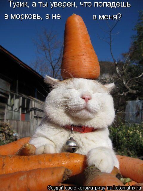 Котоматрица: Тузик, а ты уверен, что попадешь в морковь, а не в меня?