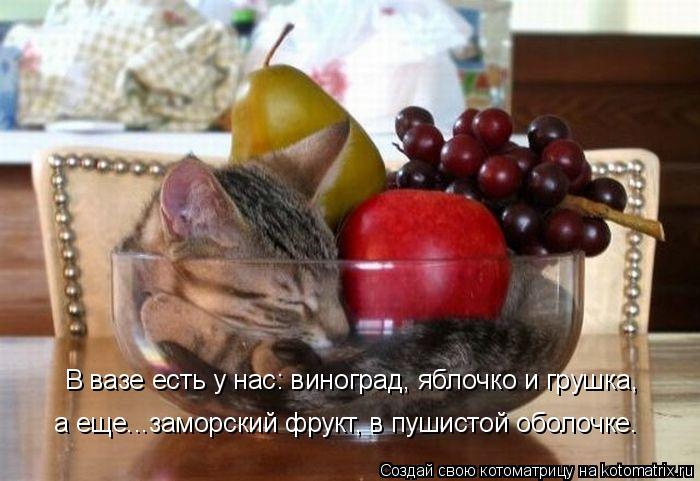 Котоматрица: В вазе есть у нас: виноград, яблочко и грушка, а еще...заморский фрукт, в пушистой оболочке.
