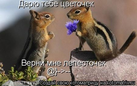 Котоматрица: Дарю тебе цветочек  Верни мне лепесточек  @}->--