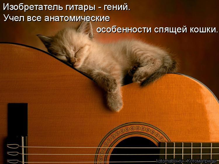 Котоматрица: Изобретатель гитары - гений. Учел все анатомические особенности спящей кошки.