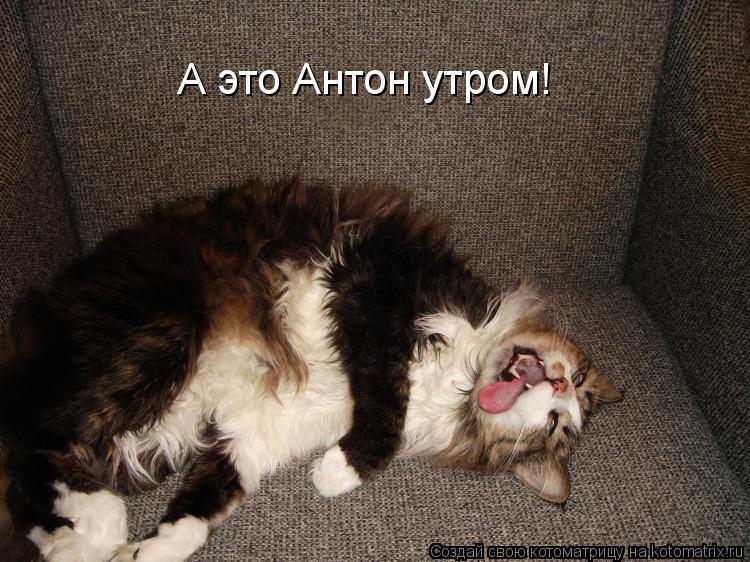 Котоматрица: А это Антон утром!