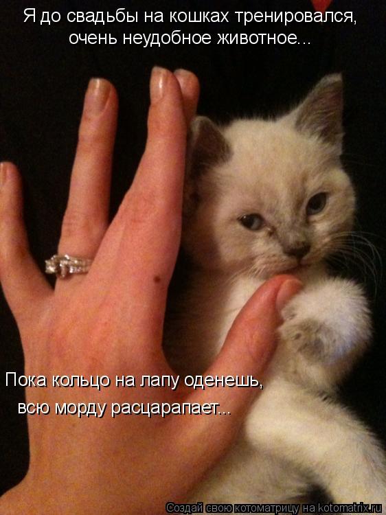 Котоматрица: Я до свадьбы на кошках тренировался,   очень неудобное животное...  Пока кольцо на лапу оденешь,  всю морду расцарапает...