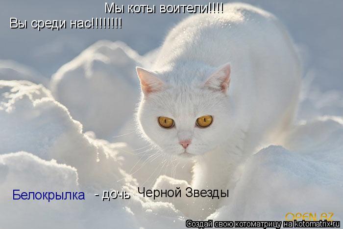 Котоматрица: Мы коты воители!!!! Белокрылка   - дочь Черной Звезды Вы среди нас!!!!!!!!