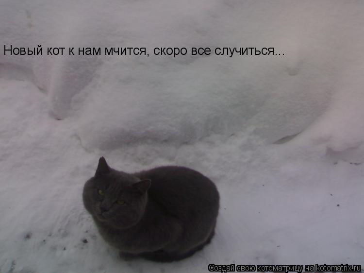 Котоматрица: Новый кот к нам мчится, скоро все случиться...
