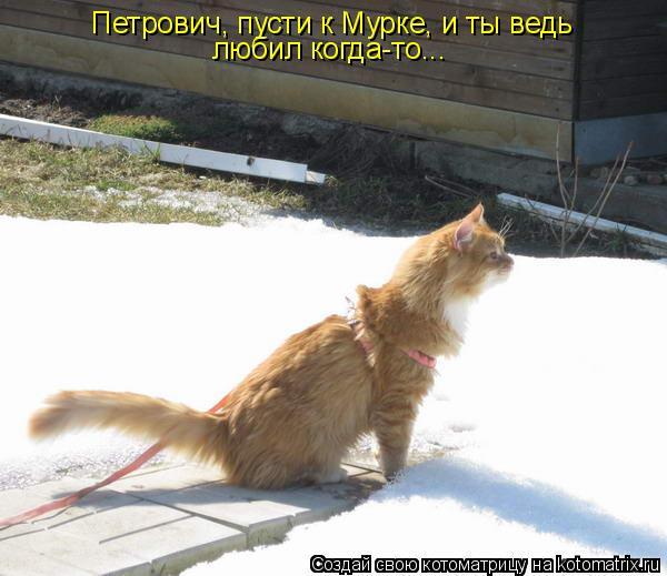 Котоматрица: Петрович, пусти к Мурке, и ты ведь любил когда-то...
