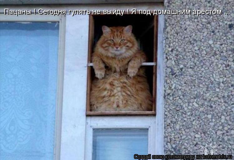 Котоматрица: Пацаны ! Сегодня гулять не выйду ! Я под домашним арестом ...