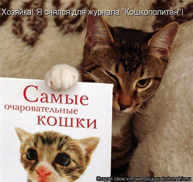 """Котоматрица: Хозяйка! Я снялся для журнала """"Кошкополитан""""!"""