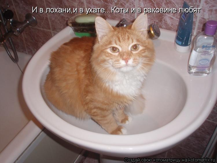 Котоматрица: И в лохани,и в ухате...Коты и в раковине любят