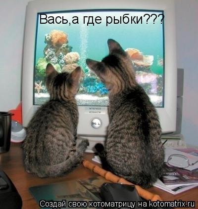 Котоматрица: Вась,а где рыбки???
