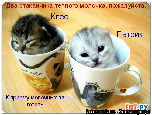 Котоматрица: Два стаканчика тёплого молочка, пожалуйста. Клео Патрик К приёму молочных ванн готовы
