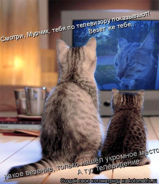 Котоматрица: Смотри, Мурчик, тебя по телевизору показывают! Везёт же тебе... Какое везение, только нашёл укромное место, А тут телевидение...