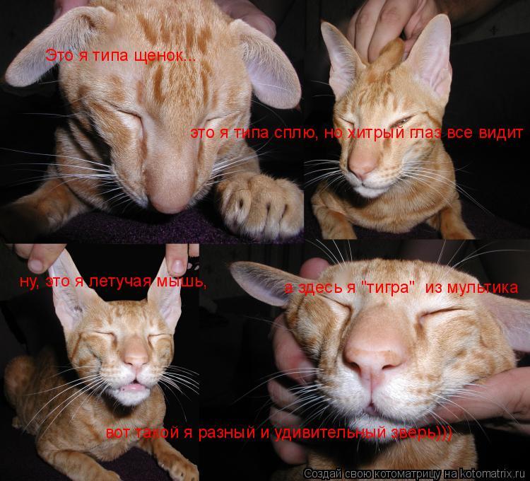 """Котоматрица: Это я типа щенок... это я типа сплю, но хитрый глаз все видит ну, это я летучая мышь, а здесь я """"тигра""""  из мультика вот такой я разный и удивител"""