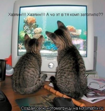 Котоматрица: Хазяин!!! Хазяин!!! А чо эт в тя комп затопило??