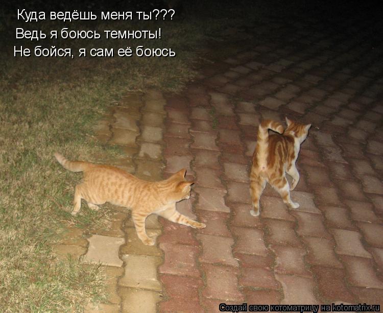 Котоматрица: Куда ведёшь меня ты??? Ведь я боюсь темноты! Не бойся, я сам её боюсь