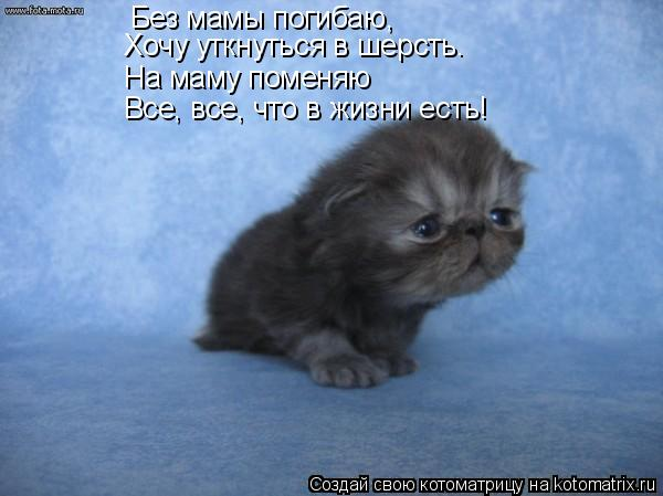 Котоматрица: Без мамы погибаю, На маму поменяю Хочу уткнуться в шерсть. Все, все, что в жизни есть!