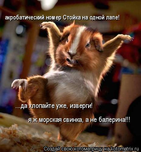 Котоматрица: акробатический номер Стойка на одной лапе!           ...да хлопайте уже, изверги!             я ж морская свинка, а не балерина!!!