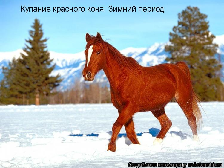 Котоматрица: Купание красного коня. Зимний период