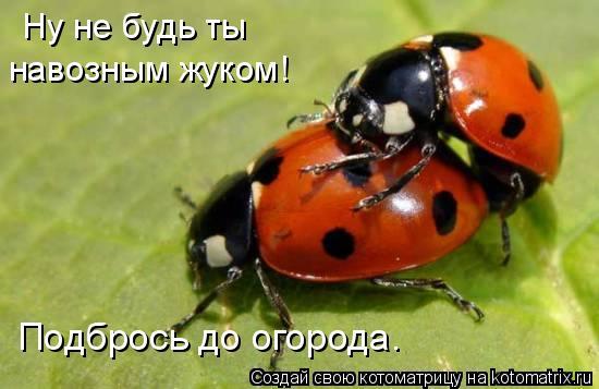 Котоматрица: Ну не будь ты  навозным жуком! Подбрось до огорода.