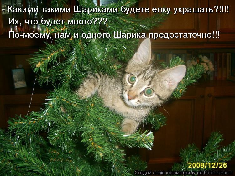Котоматрица: - Какими такими Шариками будете елку украшать?!!!! Их, что будет много??? По-моему, нам и одного Шарика предостаточно!!!