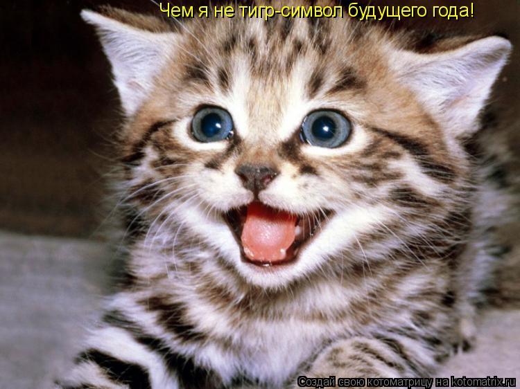 Котоматрица: Чем я не тигр-символ будущего года!