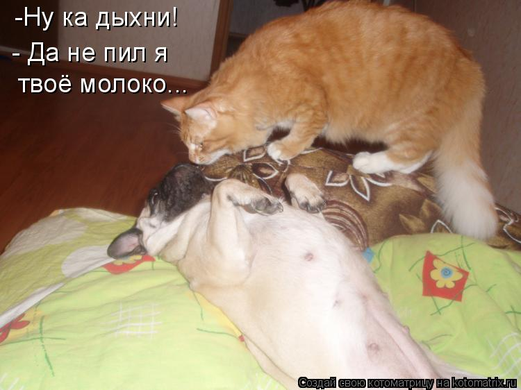 Котоматрица: -Ну ка дыхни! - Да не пил я твоё молоко...