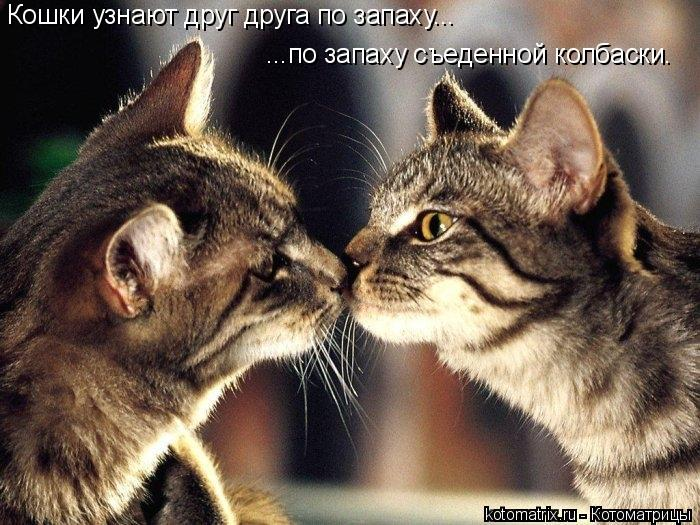 Котоматрица: Кошки узнают друг друга по запаху... ...по запаху съеденной колбаски.