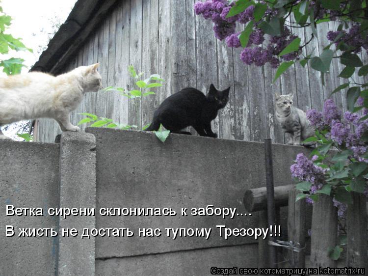 Котоматрица: Ветка сирени склонилась к забору.... В жисть не достать нас тупому Трезору!!!