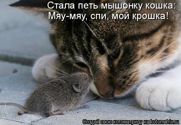 Котоматрица: Стала петь мышонку кошка: Мяу-мяу, спи, мой крошка!