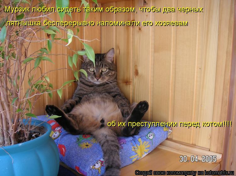 Котоматрица: Мурзик любил сидеть таким образом, чтобы два черных  пятнышка бесперерывно напоминали его хозяевам об их преступлении перед котом!!!!