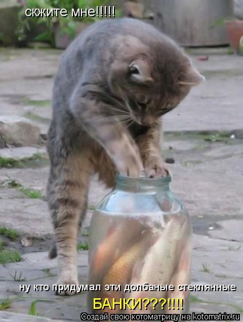 Котоматрица: скжите мне!!!!! ну кто придумал эти долбаные стеклянные БАНКИ???!!!!