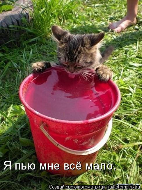 Котоматрица: Я пью мне всё мало.